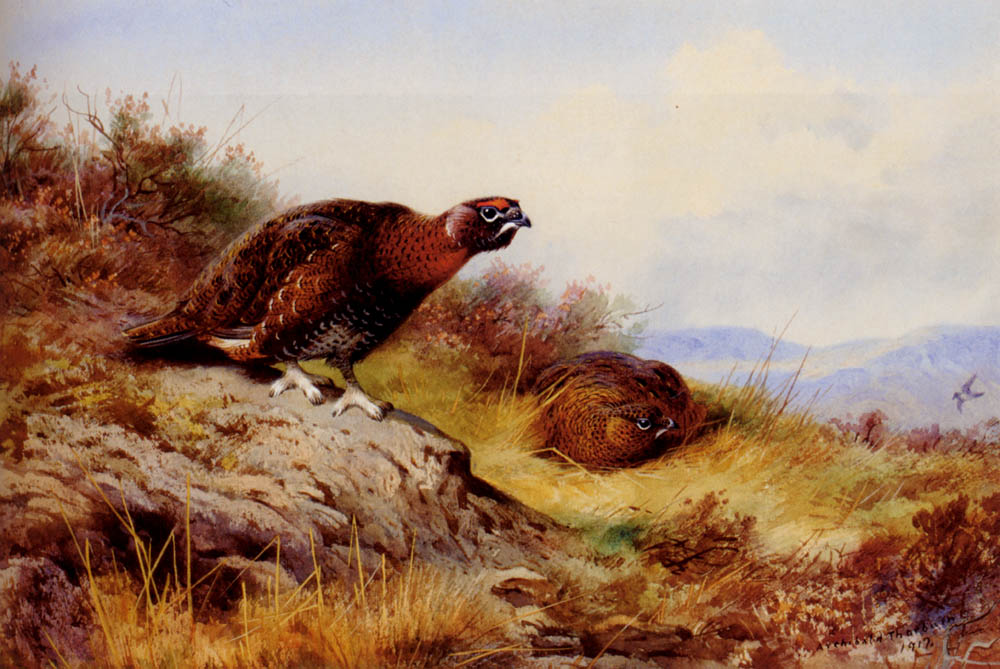 Red Grouse on the Moor